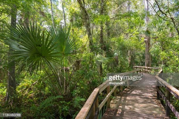 usa, florida, copeland, fakahatchee strand preserve state park, boardwalk through swamp - everglades national park stock pictures, royalty-free photos & images