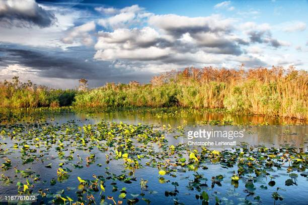 usa. florida. everglades national park. anhinga trail. view of the swamps. - anhinga_trail stock pictures, royalty-free photos & images