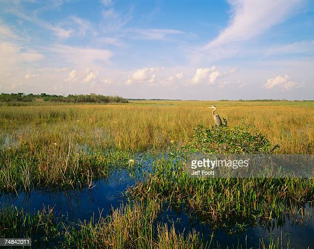 usa, florida, everglades national park - anhinga_trail 個照片及圖片檔