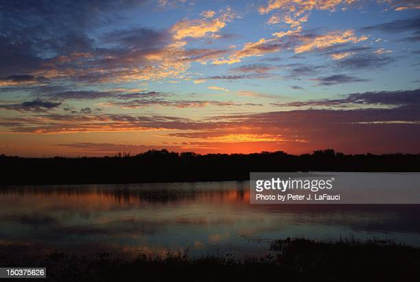 florida everglades sunset - fauci stock pictures, royalty-free photos & images