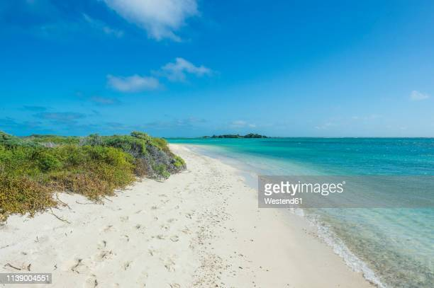 usa, florida, florida keys, dry tortugas national park, fort jefferson, white sand beach in turquoise waters - dry tortugas stock pictures, royalty-free photos & images