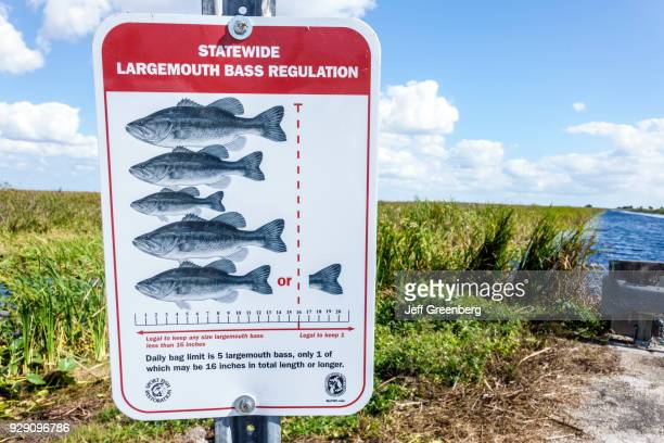 Freshwater bass stock photos and pictures getty images for Florida fish and wildlife fishing license