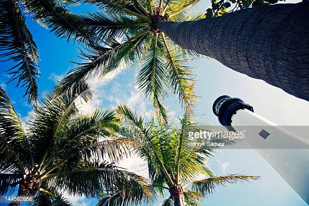 USA, Florida, Key Biscayne, Lighthouse with palm trees