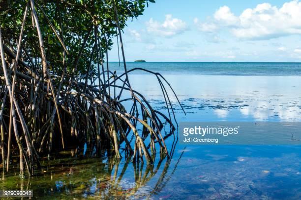 Florida Key Largo Florida Keys Wild Bird Center Laura Quinn Sanctuary Mangroves and Water