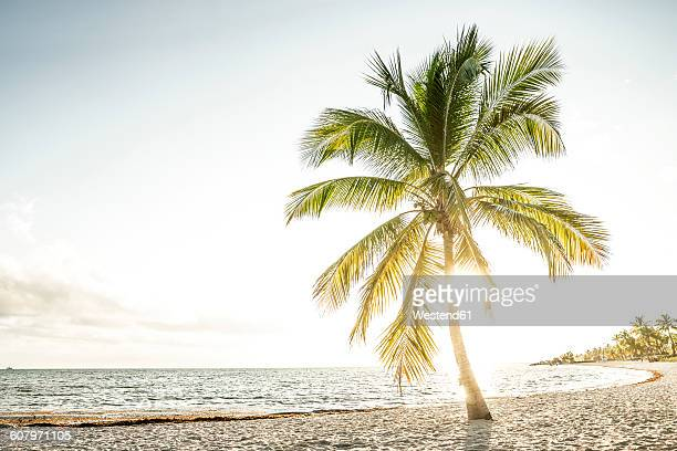usa, florida, key west, palm tree on beach in backlight - overexposed stock pictures, royalty-free photos & images