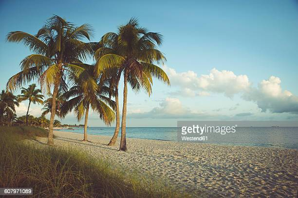 usa, florida, key west, palm trees on beach - key west stock photos and pictures