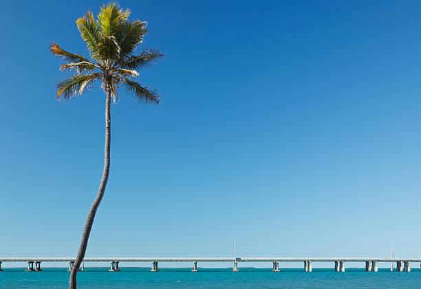 Florida Keys Landscape