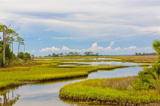 Florida Landscape of Marshland 583818832