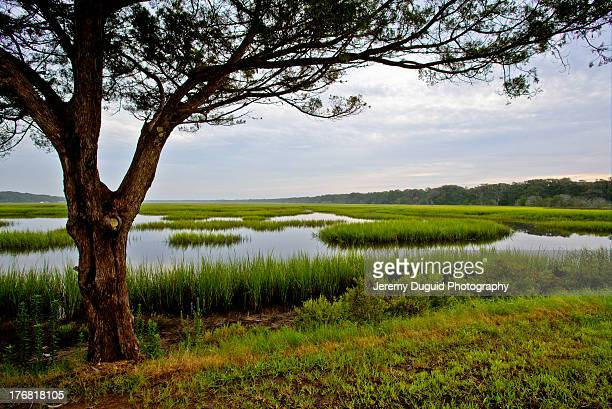 florida marsh - salt_marsh stock pictures, royalty-free photos & images