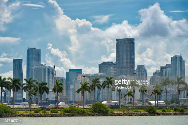 usa, florida, miami, downtown, skyline with high-rises and palm trees - miami foto e immagini stock