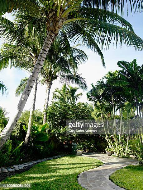 usa, florida, miami, palm trees in tropical garden - grove stock pictures, royalty-free photos & images
