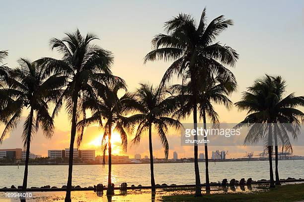 florida: von miami - miami beach miami stock-fotos und bilder