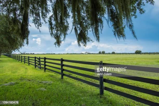 florida, myakka city, farmland - spanish moss stock pictures, royalty-free photos & images