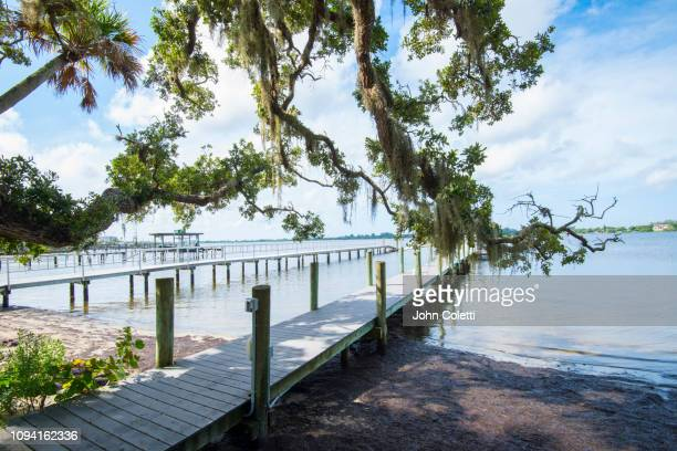 florida, osprey, bay preserve, little sarasota bay - spanish moss stock pictures, royalty-free photos & images