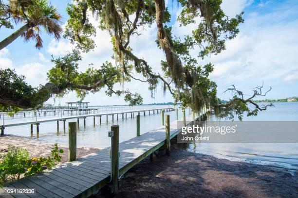 florida, osprey, bay preserve, little sarasota bay - sarasota stock pictures, royalty-free photos & images