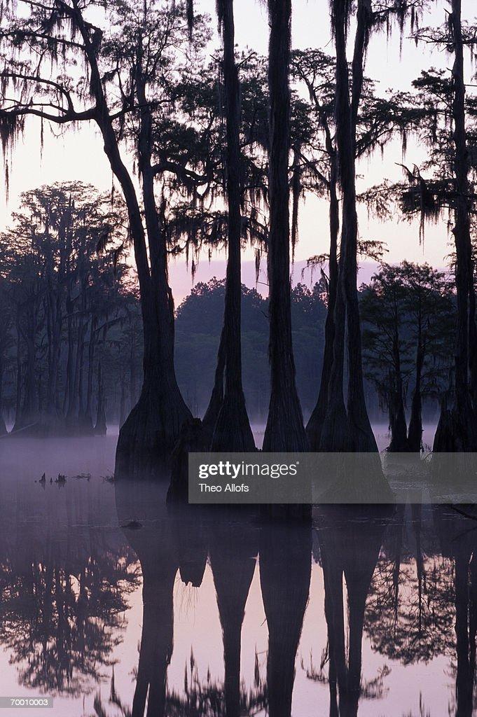 USA, Florida, Pine Log State Forest, cypress pond, sunrise : Stock Photo