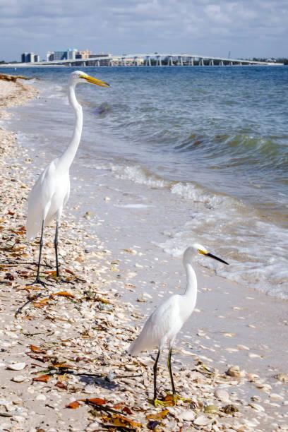 Florida, Sanibel Island, San Carlos Bay With Two Egrets On