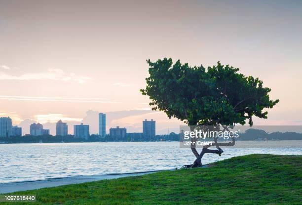 florida, sarasota, sarasota bay, bird key - sarasota stock pictures, royalty-free photos & images