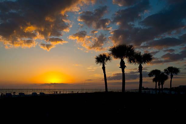 Florida Siesta Key Crescent Beach Palms Frame A Cloudy Dying Sunset