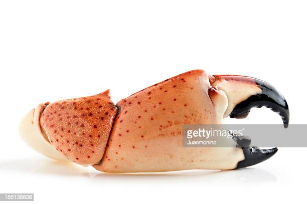 florida stone crab - crab stock pictures, royalty-free photos & images