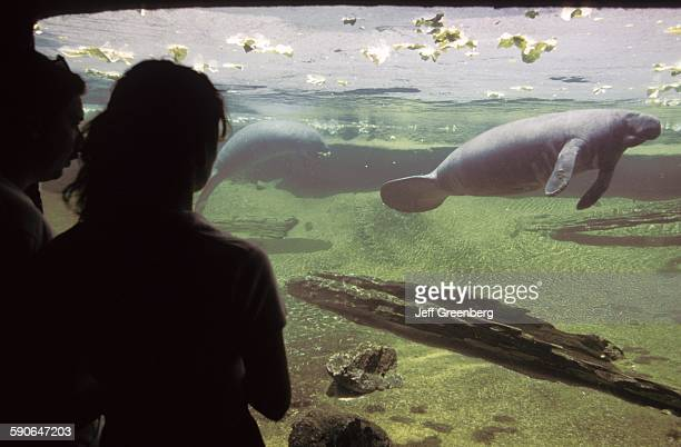 Florida, Tampa, Lowry Park Zoo, Visitors At Manatee Tank.