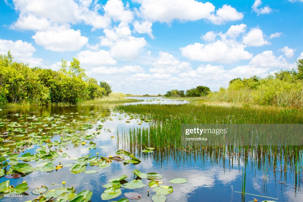 Florida wetland, Airboat ride at Everglades National Park in USA. : Stock Photo