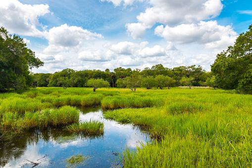 Florida wetland, natural landscape. 891835686