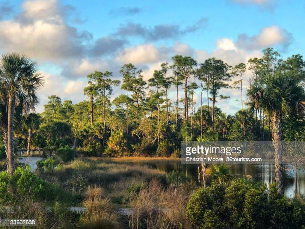 florida wetlands - everglades national park stock pictures, royalty-free photos & images