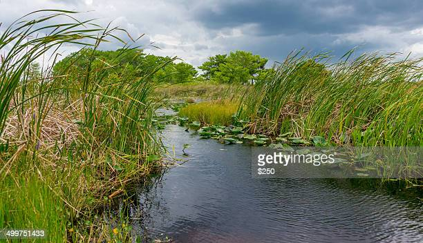 florida wetlands - vero beach stock pictures, royalty-free photos & images