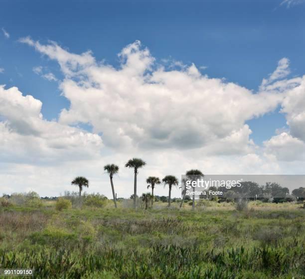 florida wetlands - svetlana stock photos and pictures