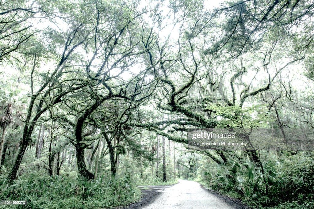 Florida,USA,Tree-Lined Road : Stock Photo