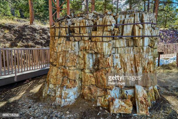 florissant fossil beds national monument, colorado, usa - fossil site stock pictures, royalty-free photos & images