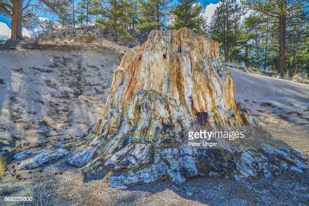 florissant fossil beds national monument, colorado, usa - petrified wood stock pictures, royalty-free photos & images