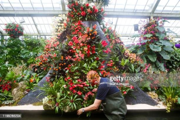 Florist and Kew volunteer Henck Roling applies the final touch to Orchids during a press preview of the 25th Kew Orchid Festival at Kew Royal...