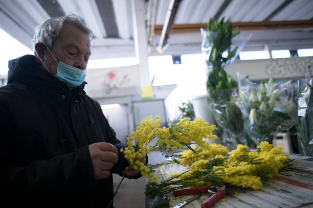 ITA: Turin's Mimosa Flower Trade Prepares For International Women's Day