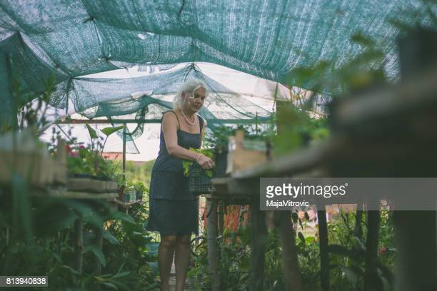 florist looking after decorative plants in greenhouse