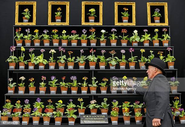A florist looks after WS Lockyer stand at the Chelsea Flower Show on May 18 2015 in London England The show which has run annually since 1913 in the...