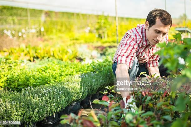 Florista hombre preparando las flores en invernadero plantation