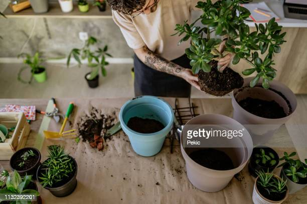florist man seedling plants - potting stock pictures, royalty-free photos & images