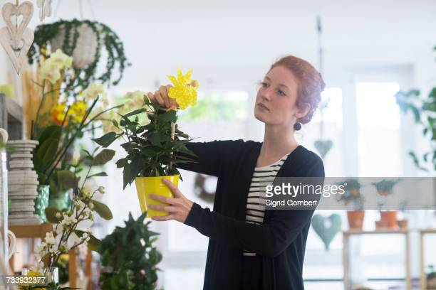 florist selecting flowers in shop - sigrid gombert stock-fotos und bilder