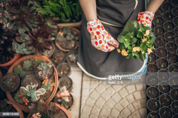 Florist woman in greenhouse