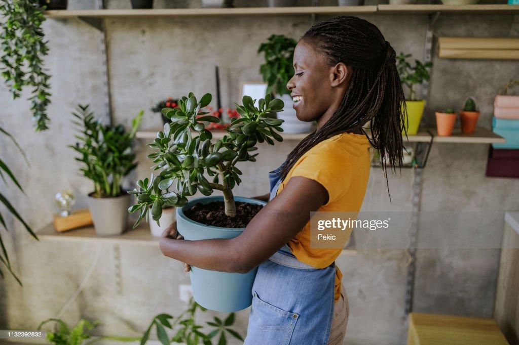 Florist Woman Seedling Plants : Stock Photo