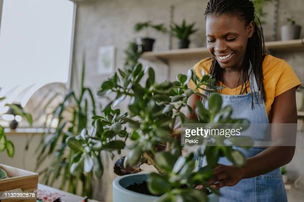 florist woman seedling plants - houseplant stock pictures, royalty-free photos & images