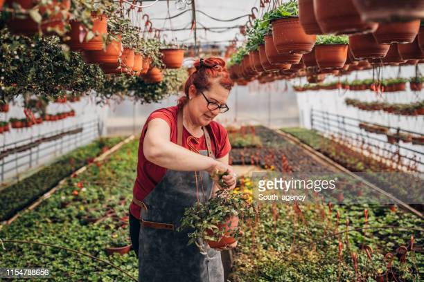 florist working at greenhouse - dyed red hair stock pictures, royalty-free photos & images