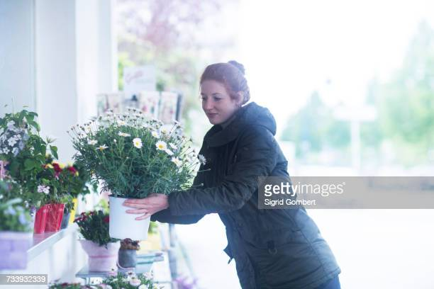florist working with potted plants - sigrid gombert 個照片及圖片檔