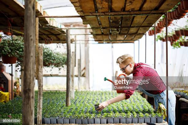Florists woman working with flowers at a greenhouse. Springtime