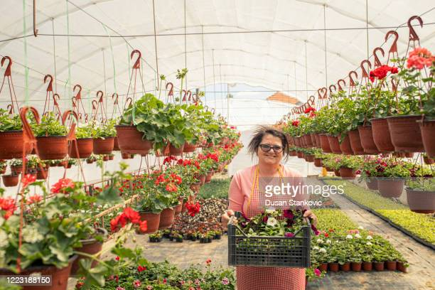 florists working in flower greenhouse - dusan stankovic stock pictures, royalty-free photos & images