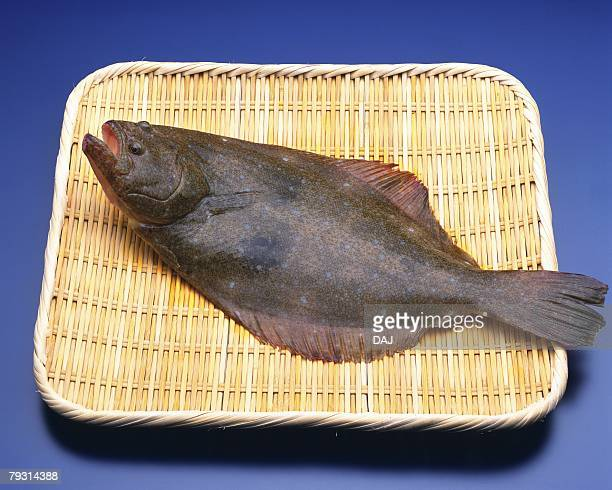 Flounder on colander, high angle view, blue background