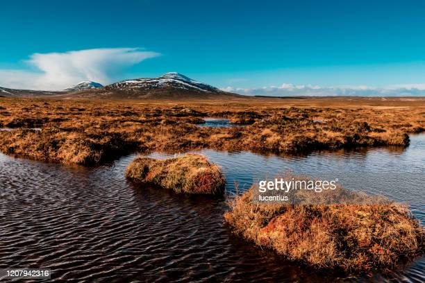 flow country peat bogs at forsinard, scotland - scotland stock pictures, royalty-free photos & images