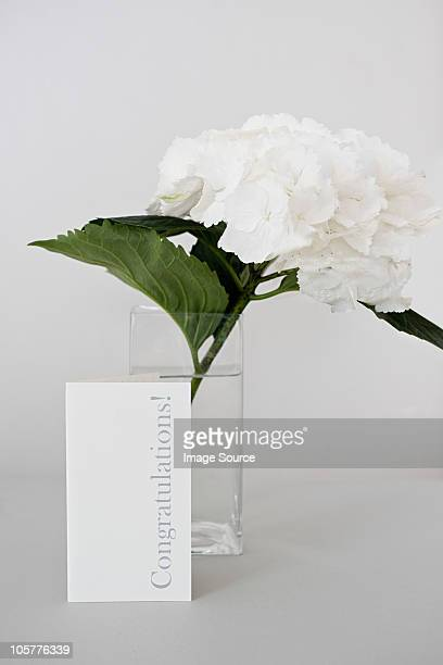 Flower and a congratulations card